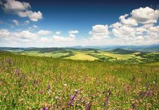 Free Flowery Meadow Royalty Free Stock Photography - 31803557