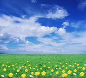 Flowery meadow Stock Images