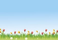 Flowery meadow. With daisies and tulips Royalty Free Stock Image