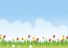 Flowery meadow. With daisies and tulips Stock Image