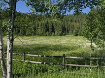 Flowery Meadow and Fence. This image was taken along the Northfork Road near Polebridge in western MT Royalty Free Stock Photography