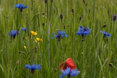 A flowery meadow. In the sun stock image