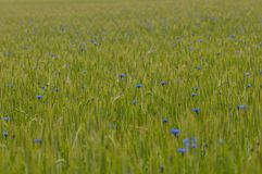 A flowery meadow. In the sun royalty free stock photography