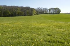 Flowery meadow in Hohenlohe Royalty Free Stock Image