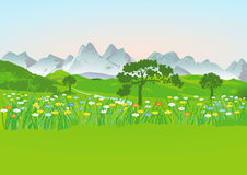 Flowery meadow and mountains Royalty Free Stock Image