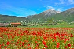 Flowery meadow Stock Image