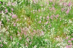 Flowery meadows Stock Photo