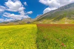 Flowery plain Stock Image