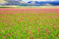 Flowery plain Royalty Free Stock Photos