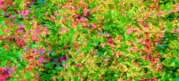 Flowery Print in Color Royalty Free Stock Photography
