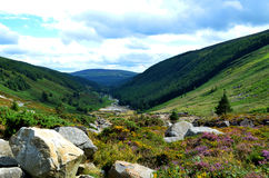 Flowery valley in Wicklow mountains (Ireland). Glacial valley with rock outcrops, plants and flowers, woods and a river in County Wicklow, Ireland Royalty Free Stock Images