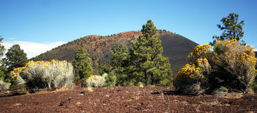 A Flowery View of Sunset Crater Royalty Free Stock Images