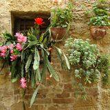 Flowery window. Succulent plants in window, Tuscany, Italy Stock Images