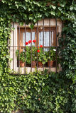 Flowery window. An old flowery window in Pedraza, Segovia (Spain Stock Images