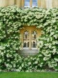 Flowery Window. Traditional enlgish Window decorated with flowers Stock Photo