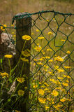 Flowery Wire Fence Stock Images