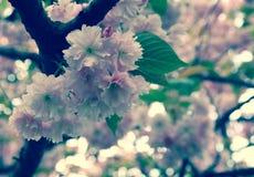 Flowes,春天是以后的III 免版税库存照片