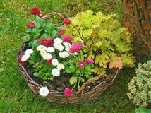 Flowes στον κήπο στοκ εικόνα με δικαίωμα ελεύθερης χρήσης