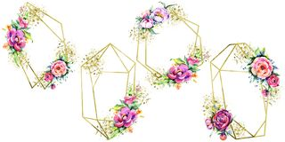 Flowes da peônia do rosa do ramalhete da aquarela Flor botânica floral Quadrado do ornamento da beira do quadro ilustração do vetor