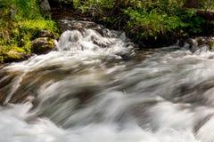 Flowes de l'eau de mouvement lent dans une région sauvage de l'Idaho de crique Photos stock