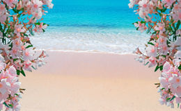 Flowes and golden shore Royalty Free Stock Image