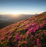 Flowes nelle montagne durante l'alba Fotografie Stock Libere da Diritti