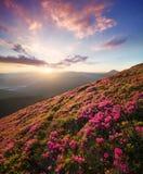 Flowes nelle montagne durante l'alba Immagine Stock