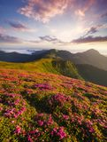 Flowes nelle montagne durante l'alba Fotografia Stock