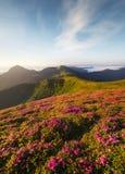 Flowes nelle montagne durante l'alba Fotografie Stock