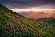 Flowes nelle montagne durante l'alba Immagini Stock Libere da Diritti