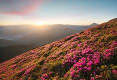 Flowes nelle montagne durante l'alba Fotografia Stock Libera da Diritti
