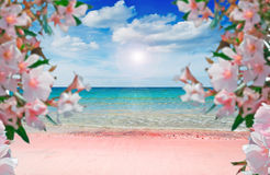 Flowes and pink shore Royalty Free Stock Photography