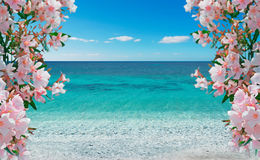 Flowes and sea Stock Photography
