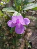 Flowet violet Photo libre de droits