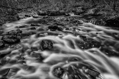 Flowing From Autumn BW Stock Image
