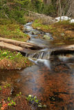 Flowing Brook. Royalty Free Stock Images