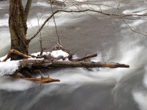 Flowing Brook in Winter Royalty Free Stock Image
