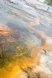 Flowing Colors. This was an area where the water flowed from one hot spring to another area at Yellowstone National Park. The colors are a mix of foliage like Royalty Free Stock Photos