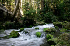 Flowing Creek Stock Photo