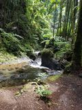 The Flowing Creek Stock Photography