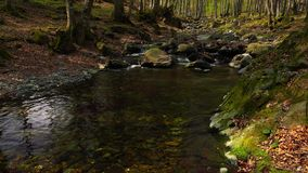 Flowing creek in a forest. The running waters of a small river flowing through a forest with dry leaves around and a few stones underwater stock footage