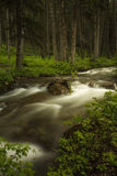 Flowing Creek in Montana Stock Images