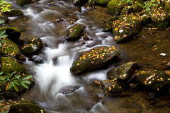 Flowing Creek Water Stock Photography