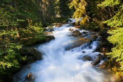 Flowing Creek in the Wilderness Stock Images