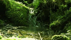 A flowing forest stream between moss-covered stones stock footage