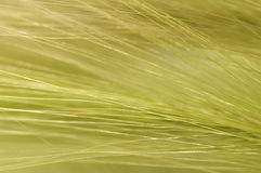 Flowing grasses Royalty Free Stock Image