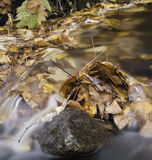 Flowing leafs autumn Royalty Free Stock Photo