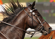 Flowing Mane. Close up of running horse with mane flowing in the wind stock photos