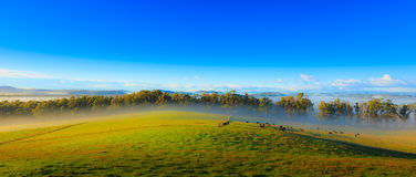 Flowing Mist Stock Photo