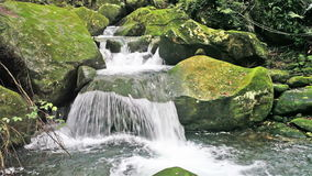 Flowing mountain stream stock video